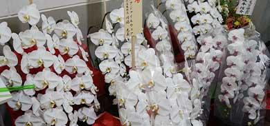 東京証券取引所マザーズ上場記念パーティ